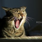 From Meow  to Roar: A Journey in Advocacy