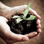 Growing Your Own:  Fostering a Viable Mentoring Program