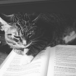 Cats, Pudding, and Apples: Still on the Quest for the Perfect Reading Program